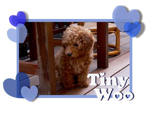 Tinywoo